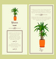 greeting card with yucca plant vector image vector image