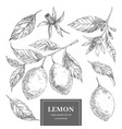 lemon hand drawn set vector image
