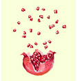 pomegranate seed splash explosion opened vector image vector image