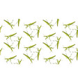 seamless pattern of mantis on white background vector image vector image