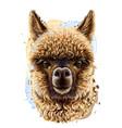 alpaca llama realistic portrait vector image vector image