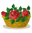 Basket with flowers roses vector image vector image