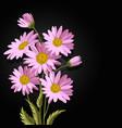 beautiful pink daisies vector image vector image