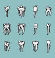 molar teeth enamel dental set work of the vector image vector image