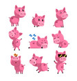 set of cute little pig in different actions