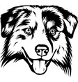 australian shepherd sheltie dog breed pet face vector image