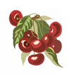 Cherry fruits Watercolor vector image vector image
