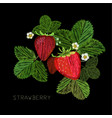embroidery fancywork with vector image