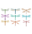 flat set of beautiful dragonflies small vector image