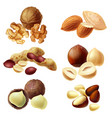 3d realistic set of various nuts vector image vector image