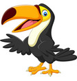 cartoon toucan isolated on white background vector image vector image