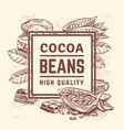 cocoa plant with leaves cacao tree background vector image