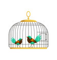 couple of beautiful birds with colorful lush tails vector image vector image