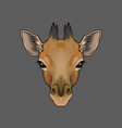 head of giraffe portrait of wild animal hand vector image