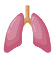 lungs large organ in a human body vector image vector image