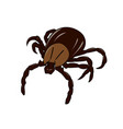 mite insect vector image vector image
