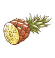pineapple cut pieces icon healthy fruit dessert vector image