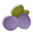 cartoon blueberries with leaves isolated on white vector image vector image