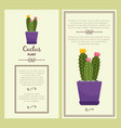 greeting card with cactus plant vector image vector image