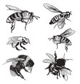 hand drawn set bees bumblebee high detailed vector image