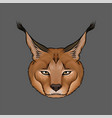 head of caracal portrait of steppe lynx animal vector image