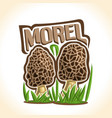 morel mushrooms vector image