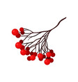small branch with bright red berries natural vector image vector image