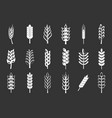 wheat icon set grey vector image vector image