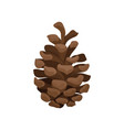brown pine cone woody fruit of conifer tree vector image vector image