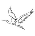 single line bbird vector image