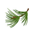 branch of pine tree with long green needles vector image vector image