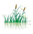 Closeup of sugar cane plantation vector image vector image