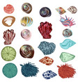 collection sea shells for design hand drawn style vector image vector image