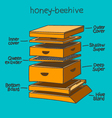 honey-beehive color vector image