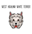 dog west highland white terrier face icon vector image