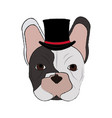 isolated hipster french bulldog design vector image vector image