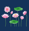 lotus realistic buds nature colored flowers yoga vector image vector image