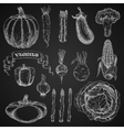 Chalk sketches of farm vegetables vector image vector image