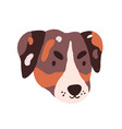 cute dog s face puppy s head of jack russell vector image vector image