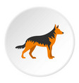 german shepherd dog icon circle vector image