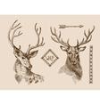 hand drawn deer vector image vector image