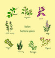 italian herbs and spices vector image vector image