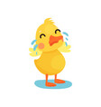cute little yellow duck chick character crying vector image