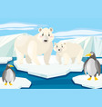 polar bears and penguins on ice vector image