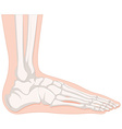 X-ray human foot bone vector image vector image