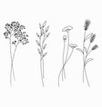 hand drawn of wildflowers set isolated on white vector image vector image