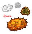 kiwano melon sketch exotic tropcial fruit vector image