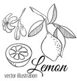 line lemon set vector image