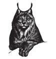 lynx vintage vector image