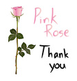 Pink Rose Meaning vector image
